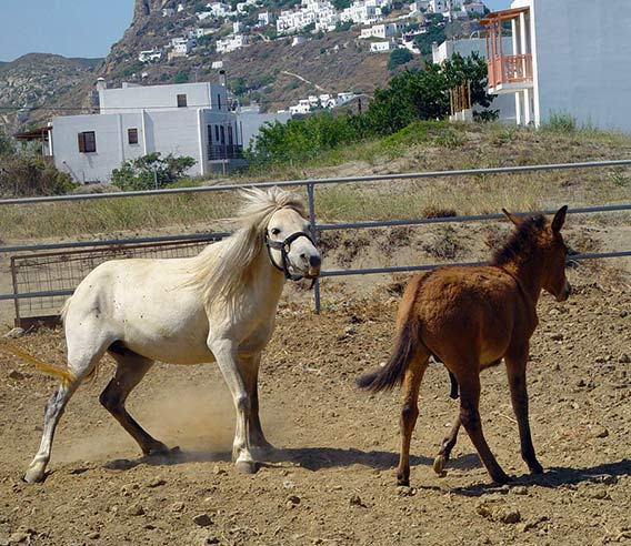 The Horses of Skyros